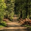 trees, forest, forest path